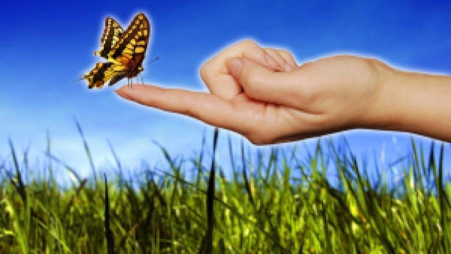 Bigstock-butterfly-sitting-on-a-woman-f-16379588-300x200